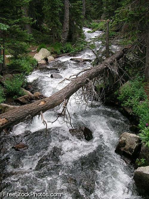 treestream