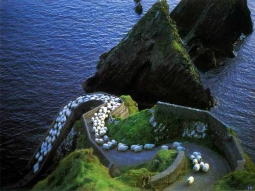sheep-hill-1